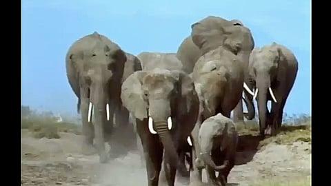 Watch Full Movie - משפחת החיות שלי - אורנגאוטן - לצפיה בטריילר